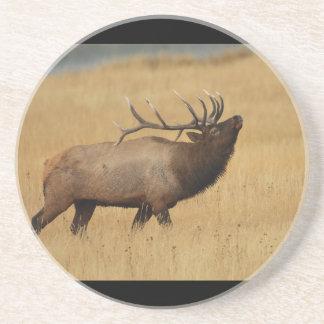 elk, antlers back coaster