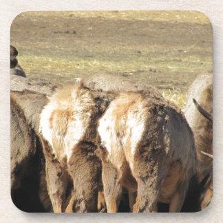 Elk Booty Coaster