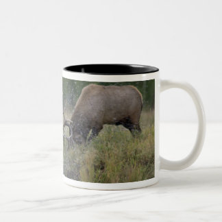 Elk Bulls fighting, Yellowstone NP, Wyoming Two-Tone Coffee Mug