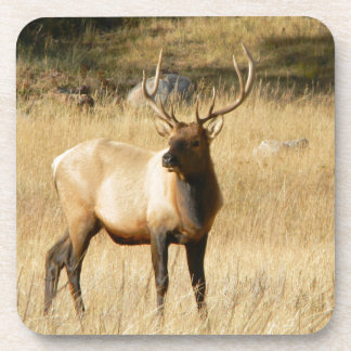 Elk Coaster