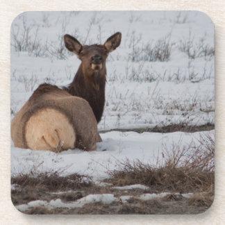 Elk Interest Coaster
