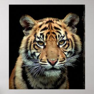 Endangered Tiger Cub Poster