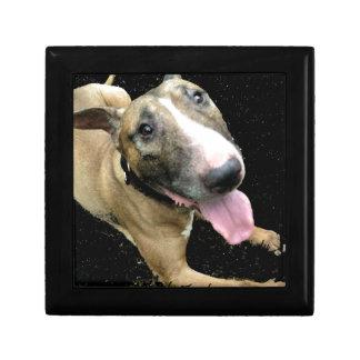 English Bull Terrier Jewellery Box