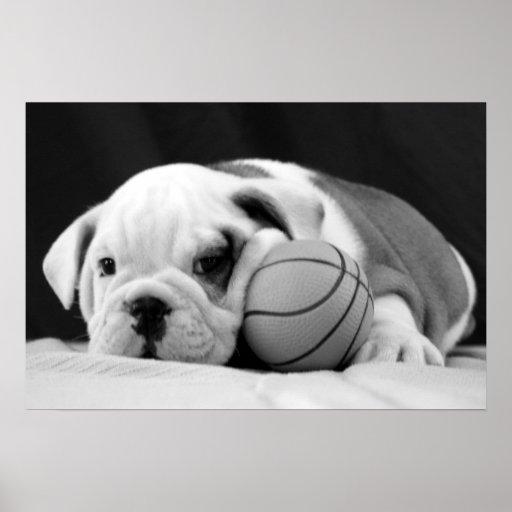 English Bulldog Basketball Puppy Poster