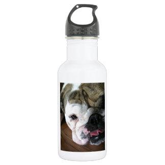 English Bulldog Puppy 532 Ml Water Bottle