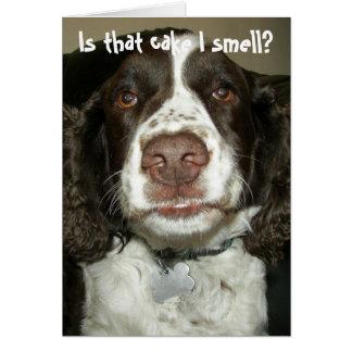 English Springer Spaniel Photo Funny Birthday Card