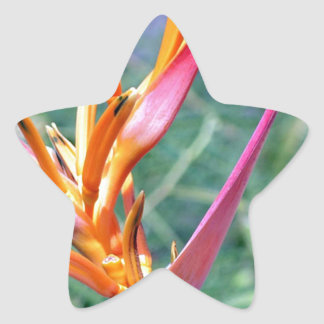 Enhanced Heliconia Flower Star Sticker