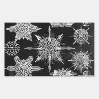 Ernst Haeckel Acanthophracta Rectangular Sticker