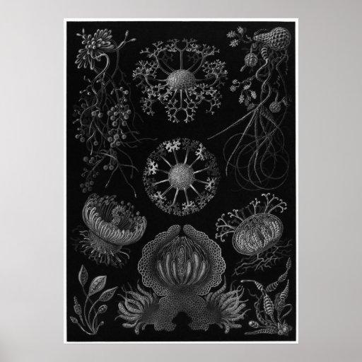 Ernst Haeckel Art Print: Ascomycetes
