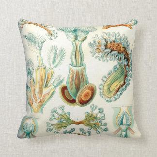 Ernst Haeckel Bryozoa invertebrates Cushion