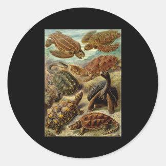 Ernst Haeckel Chelonia Classic Round Sticker