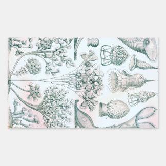 Ernst Haeckel Ciliata Sticker