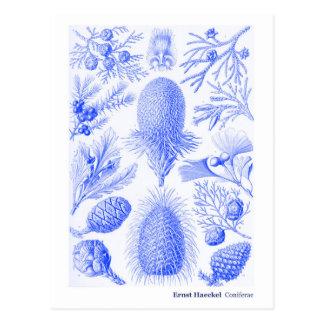 Ernst Haeckel Coniferae Blue New Address Postcard