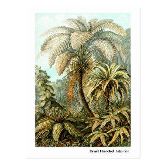 Ernst Haeckel Filicinae Ferns New Address Postcard
