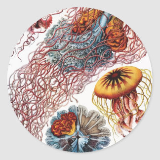 Ernst Haeckel Jellyfish Classic Round Sticker