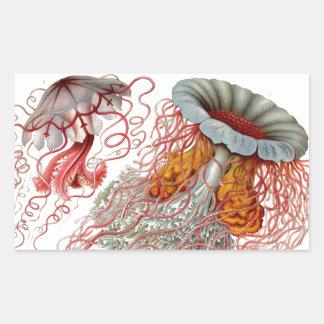 Ernst Haeckel - Kuntsformen der Nature Product Rectangular Sticker