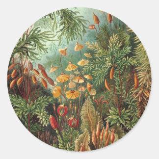 Ernst Haeckel - Muscinae Classic Round Sticker