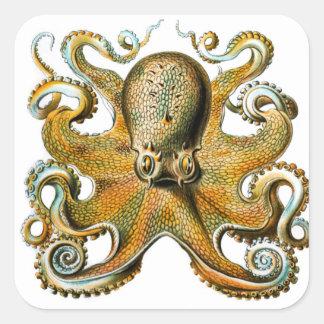 ernst haeckel octopus square sticker