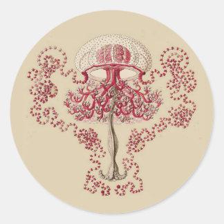Ernst Haeckel's Anthomedusea Classic Round Sticker