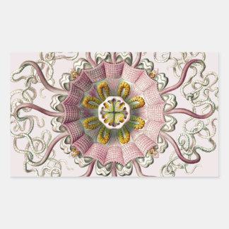 Ernst Haeckel's Peromedusae Rectangular Sticker