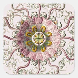 Ernst Haeckel's Peromedusae Square Sticker