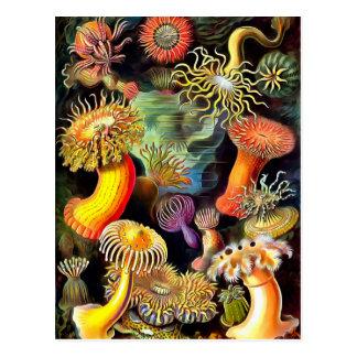 Ernst Haeckel Sea Anemones Vintage Postcard