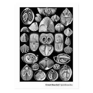 Ernst Haeckel Spirobranchia New Address Postcard