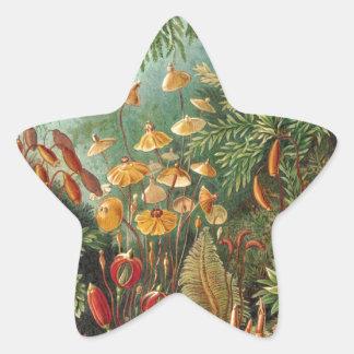 Ernst Haeckel Star Sticker