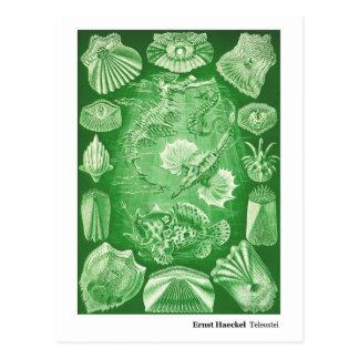 Ernst Haeckel Teleostei New Address Postcard