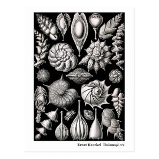 Ernst Haeckel Thalamophora II New Address Postcard
