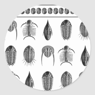 Ernst Haeckel Trilobite Pattern - large Classic Round Sticker