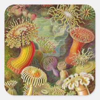 Ernst Haeckel's Actinae Ocean Life Square Sticker