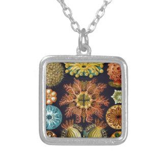 Ernst Haeckel's Ascidiae Ocean Life Silver Plated Necklace