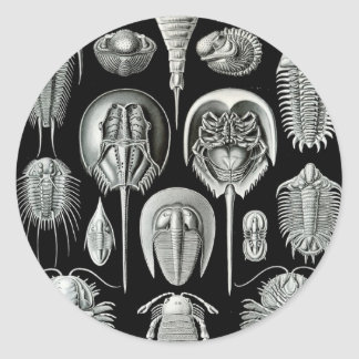Ernst Haeckel's Aspidonia Classic Round Sticker