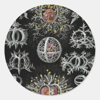 Ernst Haeckel's Stephoidea Classic Round Sticker