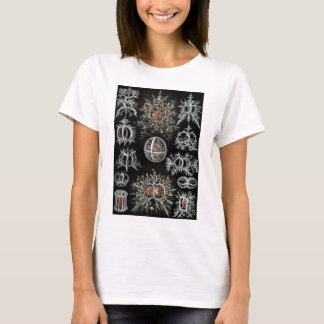 Ernst Haeckel's Stephoidea T-Shirt