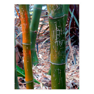 Etched Bamboo Postcard