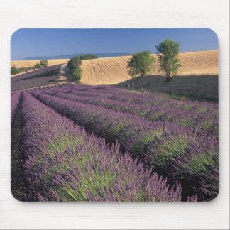 EU, France, Provence, Lavender fields 3 Mouse Pad