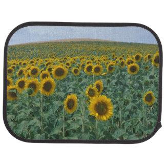 EU, France, Provence, Sunflower field Car Mat