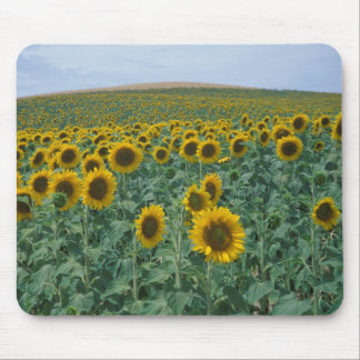 EU, France, Provence, Sunflower field Mouse Pad