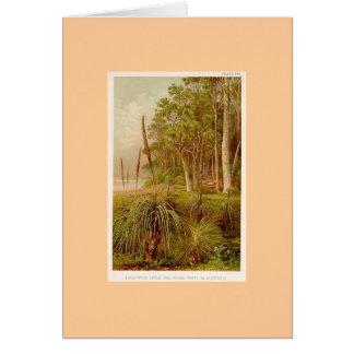Eucalyptus Grove & Grass-Trees in Australia Card