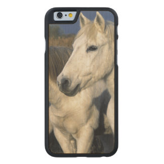Europe, France, Ile del la Camargue. Camargue 3 Carved Maple iPhone 6 Case