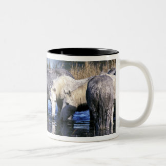 Europe, France, Ile del la Camargue. Camargue Two-Tone Coffee Mug