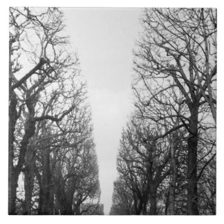 Europe, France, Paris. Winter trees, Marco Polo Tile
