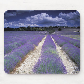 Europe, France, Provence. Lavander fields Mouse Pad