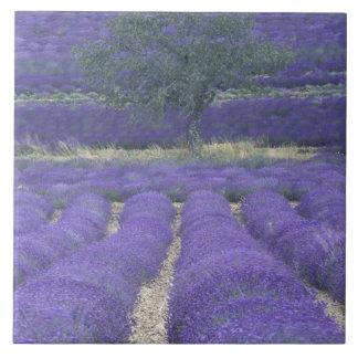 Europe, France, Provence, Sault, Lavender fields 2 Tile