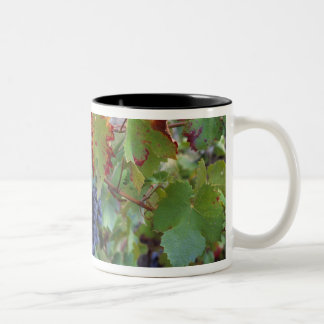 Europe, France, Roussillon. Vineyards, with Two-Tone Coffee Mug