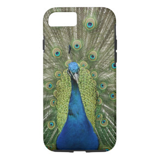 Europe, Wales, Cardiff. Cardiff Castle, peacock iPhone 7 Case