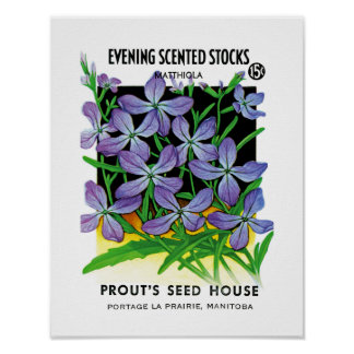 Evening Scented Stocks Seed Packet Label Poster