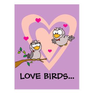 Everyday Romance: Love Birds Postcard